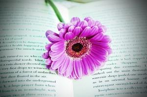 libro con fiore viola